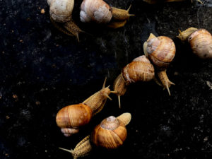 types-and-variations-of-snails