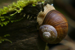 facts-about-snails2